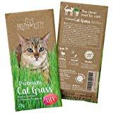 Premium Katzengras Samen von Pretty Kitty, 25g Saatmischung f&uuml,r 10 T&ouml,pfe fertiges Katzengras, 1 Beutel: Amazon.de: Hau